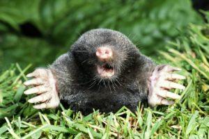 mole-big-578e5adf5f9b584d2015e449