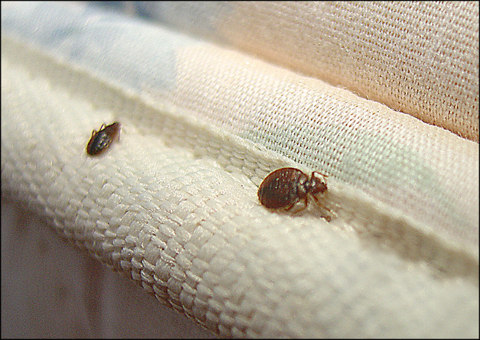 Unpacking Bed Bugs